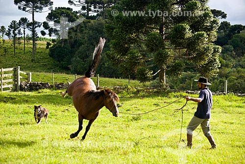 Gaúchos domando cavalo  - São Francisco de Paula - Rio Grande do Sul (RS) - Brasil