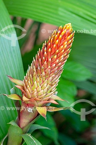 Detalhe de flor de bromélia no Parque das Aves  - Foz do Iguaçu - Paraná (PR) - Brasil