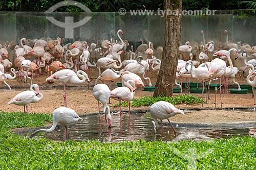 Flamingos no Parque das Aves  - Foz do Iguaçu - Paraná (PR) - Brasil