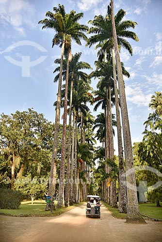 Carrinho elétrico na Aleia Barbosa Rodrigues - mais conhecida como Aleia das Palmeiras - no Jardim Botânico do Rio de Janeiro  - Rio de Janeiro - Rio de Janeiro (RJ) - Brasil