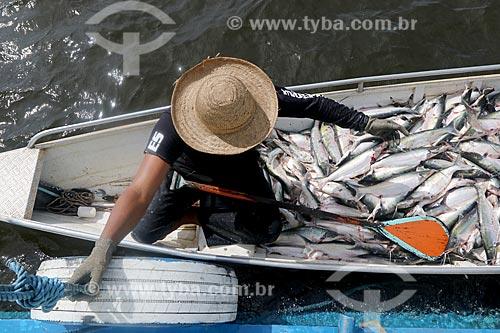 Pesca do mapará (Hypophthalmus edentatus) no Lago dos Reis  - Careiro - Amazonas (AM) - Brasil