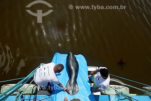 Reintrodução de Peixe-boi-da-amazônia (Trichechus inunguis) na Reserva de Desenvolvimento Sustentável Piagaçu-Purus  - Amazonas (AM) - Brasil
