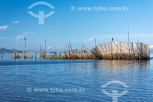 Curral de pesca na Baía de Guanabara durante o amanhecer  - Magé - Rio de Janeiro (RJ) - Brasil