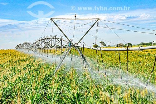 Irrigação de plantação de milho com pivô central  - Buritama - São Paulo (SP) - Brasil