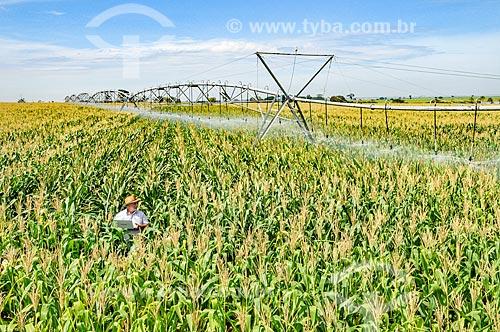 Agricultor utilizando computador no campo em meio ao milharal  - Buritama - São Paulo (SP) - Brasil