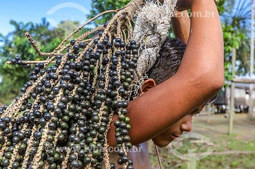 Jovem ribeirinho colhendo açaí na Reserva de Desenvolvimento Sustentável Anamã  - Barcelos - Amazonas (AM) - Brasil