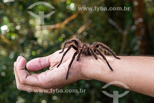 Detalhe de aranha-caranguejeira sobre braço de homem no Parque Nacional da Tijuca  - Rio de Janeiro - Rio de Janeiro (RJ) - Brasil