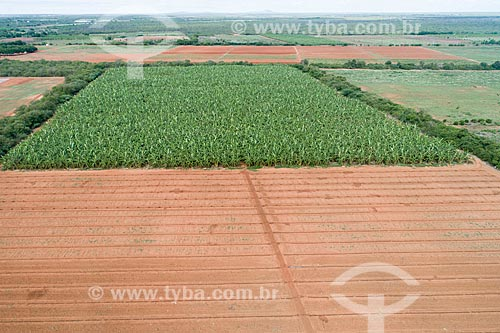 Foto feita com drone de plantação de banana irrigadas com captação em poço artesiano  - Mossoró - Rio Grande do Norte (RN) - Brasil