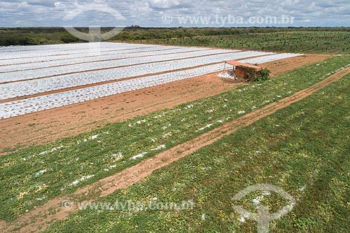 Foto feita com drone de plasticultura - cultivo protegido por plástico para garantir uma produção maior e diminuir as ameaças às plantações - de melão  - Mossoró - Rio Grande do Norte (RN) - Brasil