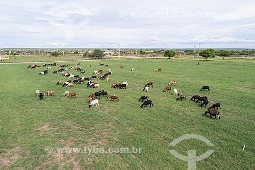 Foto feita com drone de fazenda com criação de carneiros no pasto  - Macau - Rio Grande do Norte (RN) - Brasil