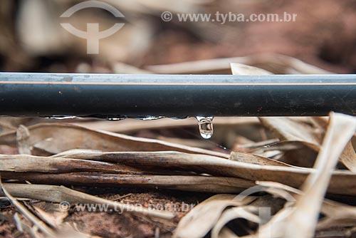 Detalhe de sistema de gotejamento de poço artesiano em plantação de banana  - Mossoró - Rio Grande do Norte (RN) - Brasil