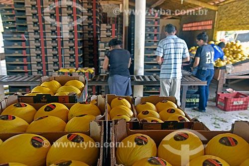 Galpão de seleção e embalagem de melão (Cucumis melo)  - Mossoró - Rio Grande do Norte (RN) - Brasil