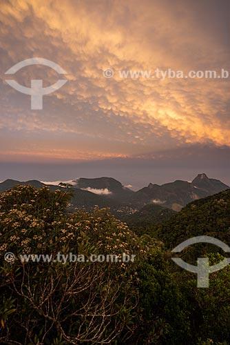 Vista a partir do Bico do Papagaio no Parque Nacional da Tijuca durante o pôr do sol  - Rio de Janeiro - Rio de Janeiro (RJ) - Brasil