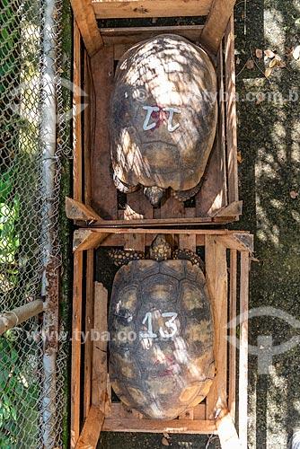 Jabutis-piranga (Chelonoidis carbonaria) identificados com números no Centro de Triagem de Animais Silvestres (CETAS) da Floresta Nacional Mário Xavier  - Seropédica - Rio de Janeiro (RJ) - Brasil