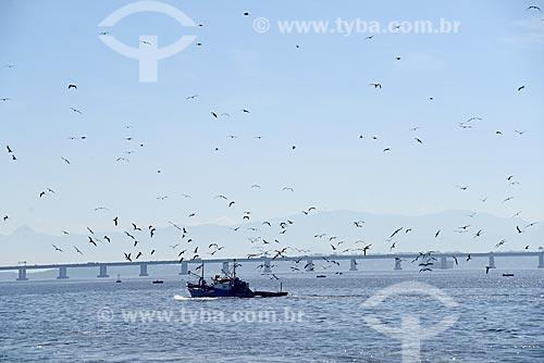 Pesqueiro na Baía de Guanabara cercado de aves marinhas com a Ponte Rio-Niterói ao fundo  - Rio de Janeiro - Rio de Janeiro (RJ) - Brasil