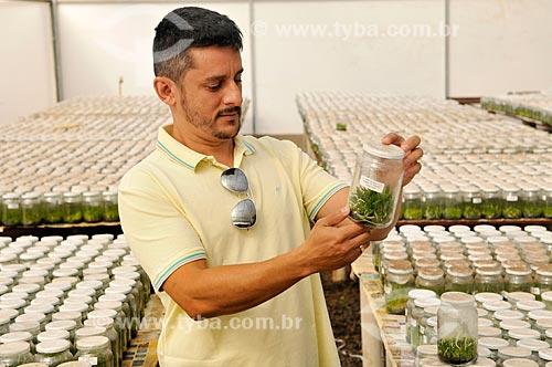 Produtor rural checando produção de orquídeas in vitro  - São José do Rio Preto - São Paulo (SP) - Brasil