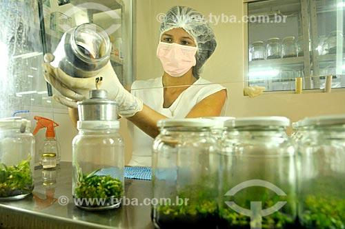 Laboratorista dividindo mudas para produção de orquídeas in vitro  - São José do Rio Preto - São Paulo (SP) - Brasil