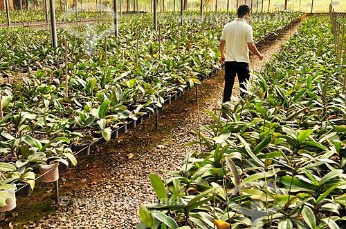 Produtor rural em estufa de orquídeas  - São José do Rio Preto - São Paulo (SP) - Brasil