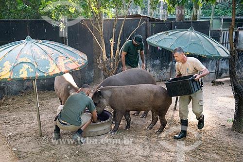 Funcionários alimentando antas (Tapirus terrestris) do projeto de reintrodução de antas no Jardim Zoológico do Rio de Janeiro  - Rio de Janeiro - Rio de Janeiro (RJ) - Brasil