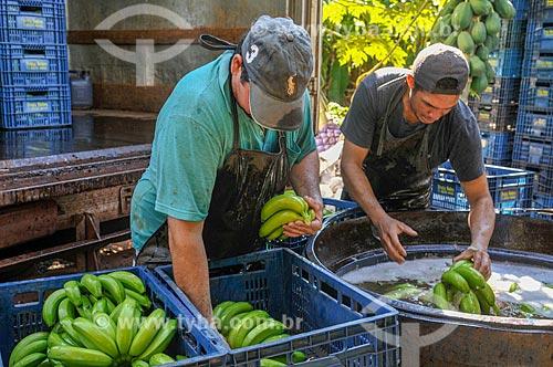 Trabalhadores rurais lavando e encaixotando banana nanica  - São Francisco - São Paulo (SP) - Brasil
