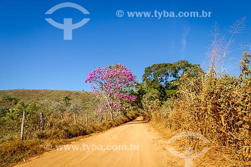 Ipê Rosa (Tabebuia heptaphylla) em estrada de terra na zona rural da cidade de Guarani  - Guarani - Minas Gerais (MG) - Brasil
