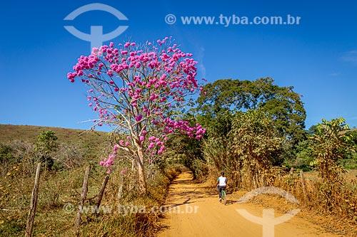 Mulher andando de bicicleta em estrada de terra na zona rural da cidade de Guarani com Ipê Rosa (Tabebuia heptaphylla)  - Guarani - Minas Gerais (MG) - Brasil