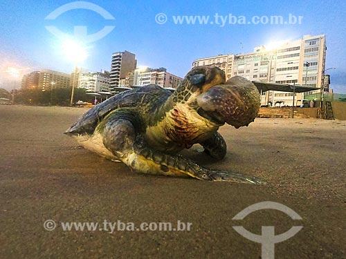 Detalhe de tartaruga marinha morta na orla da Praia de Copacabana  - Rio de Janeiro - Rio de Janeiro (RJ) - Brasil