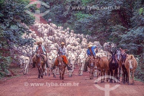 Boiadeiros conduzindo o gado na Pantanal - década de 90  - Mato Grosso (MT) - Brasil