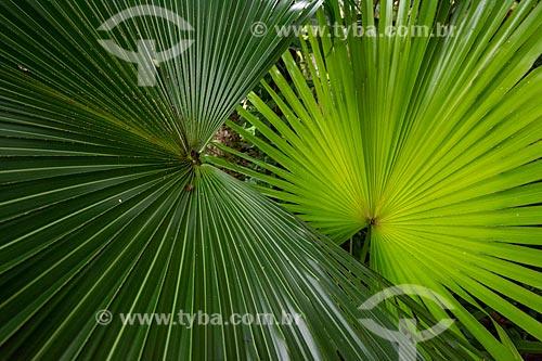 Detalhe de vegetação no Parque Nacional da Tijuca  - Rio de Janeiro - Rio de Janeiro (RJ) - Brasil