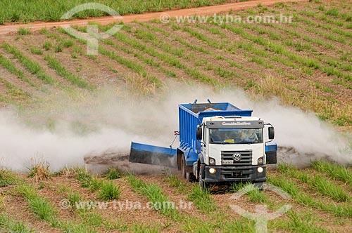 Caminhão espalhando calcário em plantação de cana-de-açúcar  - Mirassol - São Paulo (SP) - Brasil