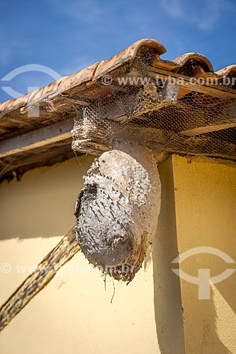 Colméia de marimbondo em casa na zona rural da cidade de Guarani  - Guarani - Minas Gerais (MG) - Brasil