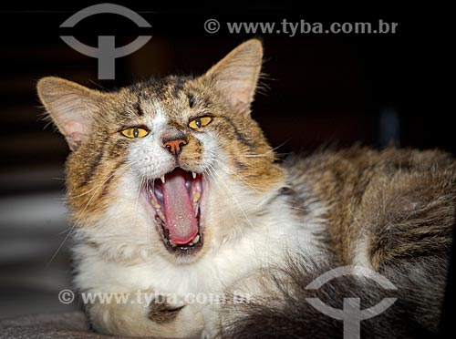 Detalhe de gato na zona rural da cidade de Guarani  - Guarani - Minas Gerais (MG) - Brasil