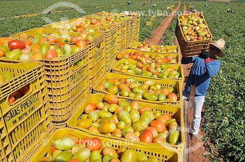 Transporte de engradados de tomate em trator durante colheita de tomate  - José Bonifácio - São Paulo (SP) - Brasil
