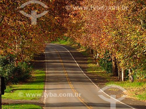 Trecho da Rota Romântica durante o outono  - Rio Grande do Sul (RS) - Brasil
