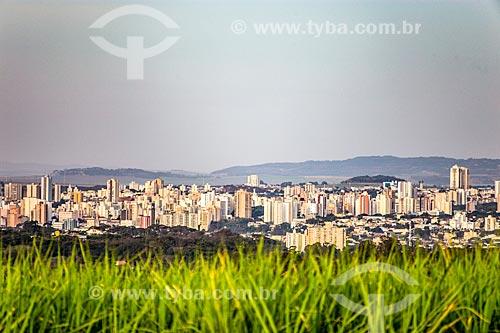 Canavial com a cidade de Ribeirão Preto ao fundo  - Ribeirão Preto - São Paulo (SP) - Brasil