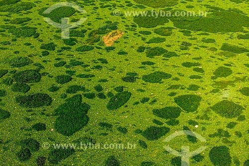 Foto feita com drone do leito de Rio Tietê com aguapés (Eichornia crassipes)  - Botucatu - São Paulo (SP) - Brasil