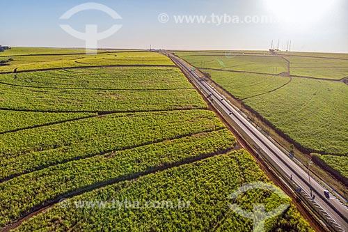 Foto feita com drone da Rodovia SP-333 em meio à canavial   - Ribeirão Preto - São Paulo (SP) - Brasil