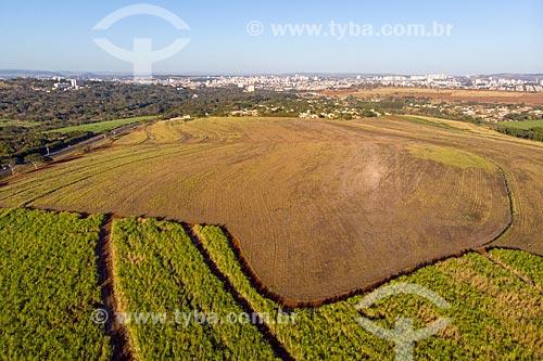 Foto feita com drone de canavial próximo à Rodovia SP-333 com a cidade de Ribeirão Preto ao fundo  - Ribeirão Preto - São Paulo (SP) - Brasil