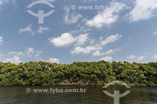 Árvores na orla do Rio Preguiças próximo ao Parque Nacional dos Lençóis Maranhenses  - Barreirinhas - Maranhão (MA) - Brasil