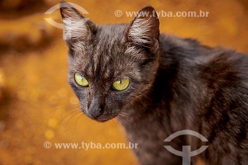 Gato doméstico  - Guarani - Minas Gerais (MG) - Brasil
