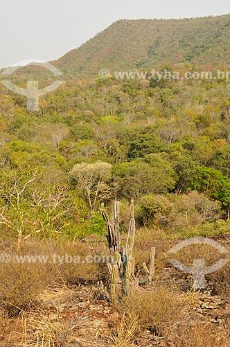 Área de vegetação de cerrado na encosta da Gruta do Pitoco - na Serra do Bom Sucesso  - Alcinópolis - Mato Grosso do Sul (MS) - Brasil