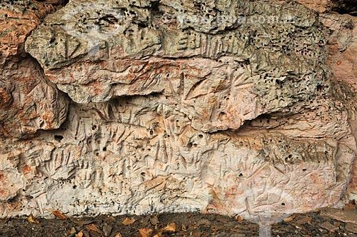 Detalhe de petróglifo - Sítio Arqueológico Gruta do Barro Branco  - Alcinópolis - Mato Grosso do Sul (MS) - Brasil