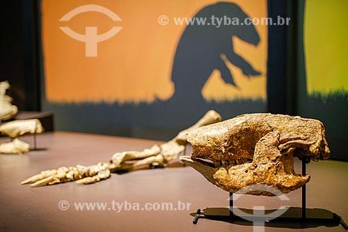 Ossada de um animal da mega fauna - Preguiça-gigante - Museu da Natureza  - Coronel José Dias - Piauí (PI) - Brasil