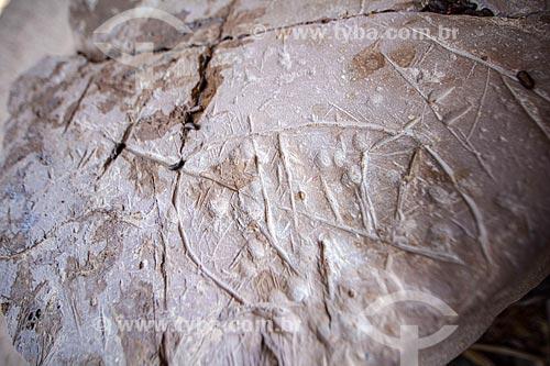 Detalhe de pintura rupestre - no Sítio Arqueológico Toca do Vento - Parque Nacional Serra da Capivara  - São Raimundo Nonato - Piauí (PI) - Brasil