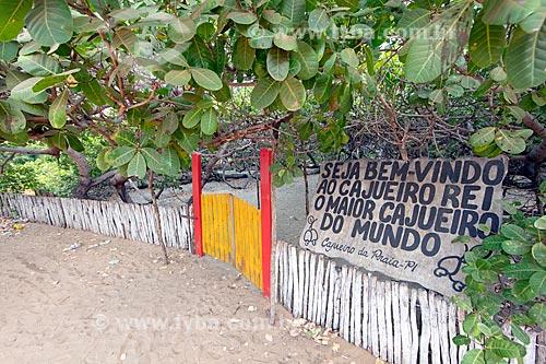 Maior cajueiro do mundo  - Cajueiro da Praia - Piauí (PI) - Brasil