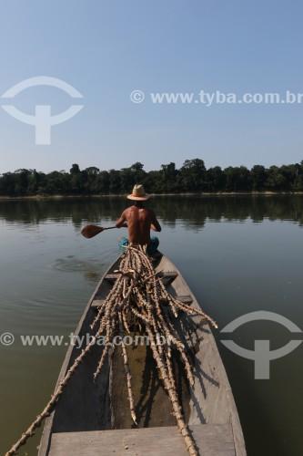 Ribeirinho transportando maniva, a raiz da mandioca, no Rio Aripuanã - Reserva de Desenvolvimento Sustentável do Juma - Novo Aripuanã - Amazonas (AM) - Brasil
