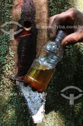 Extração de Óleo de Copaíba (Copaifera langsdorffii) - Reserva de Desenvolvimento Sustentável do Juma - Novo Aripuanã - Amazonas (AM) - Brasil
