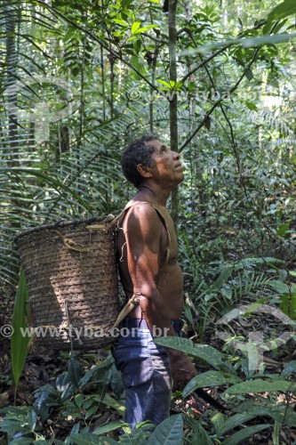 Ribeirinho Manoel Bernardo de Oliveira Almeida, que faz extração de Óleo de Copaíba (Copaifera langsdorffii) - Reserva de Desenvolvimento Sustentável do Juma - Novo Aripuanã - Amazonas (AM) - Brasil