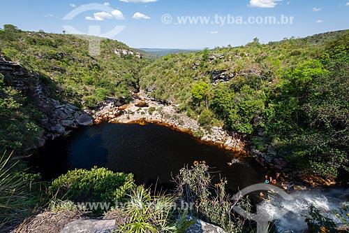 Aranha-pescadora (Trechaleoides biocellata) na Cachoeira do Mosquito - Parque Nacional da Chapada Diamantina  - Lençóis - Bahia (BA) - Brasil