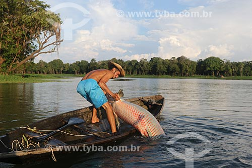 Pescador durante a Pesca do Pirarucu (Arapaima gigas) - Reserva de Desenvolvimento Sustentável Piagaçu-Purus  - Beruri - Amazonas (AM) - Brasil